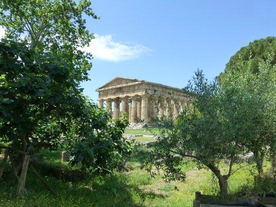Templi Greci di Paestum: Ruins at Paestum