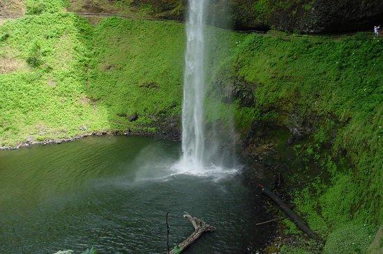 Silver Falls State Park: Silver Falls #2