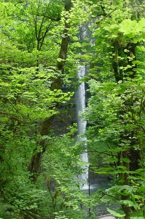 Silver Falls State Park: Silver Falls #7