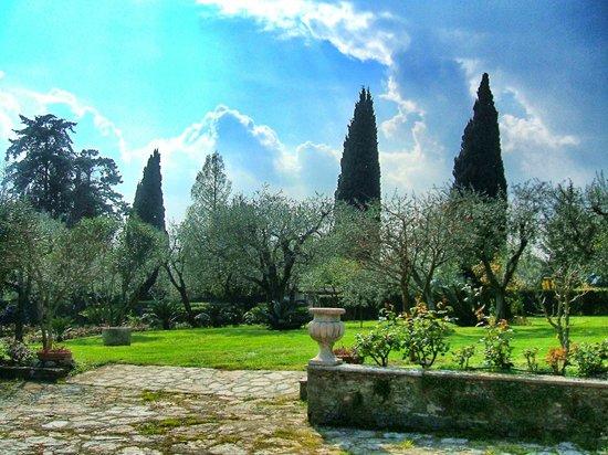 Villa Paradiso : Giardino di ulivi