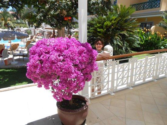 Hotel Riu Garoe : Bar area