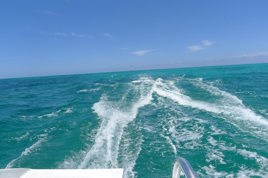 Robbie's of Islamorada: View from back of the Happy Cat