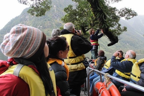 Doubtful Sound : Small boat tour! and guide explaining on the plants..