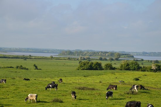 Bunratty Meadows Bed and Breakfast : View of surrounding farmland with Shannon River in distance.