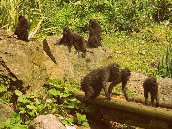 Dublin Zoo: monkey