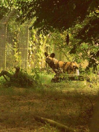 Dublin Zoo: animals