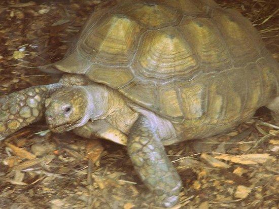 Dublin Zoo: tortoise