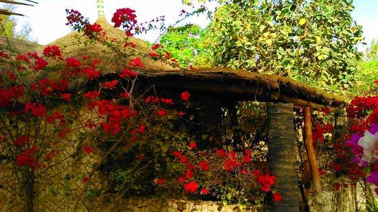 Jardin picture of le calao du lac rose dakar tripadvisor for Le jardin dakar