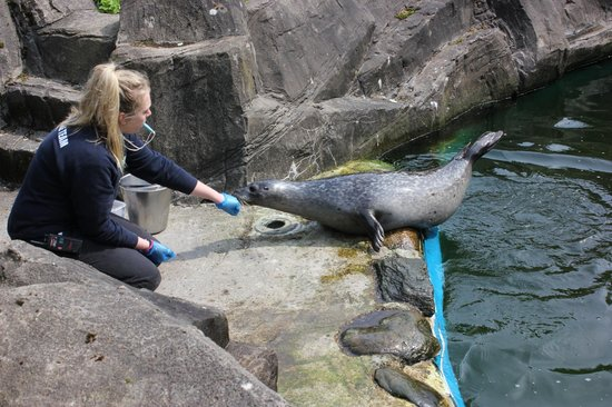The Scottish SEA LIFE Sanctuary: Fütterungszeit