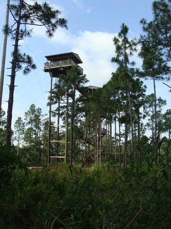 Forever Florida: First Zip Line Station