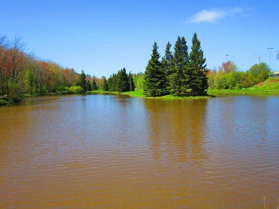Centennial Park: View of central pond
