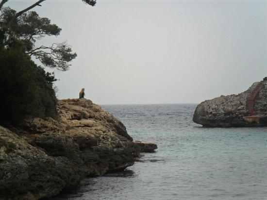 AluaSoul Mallorca Resort: From the beach