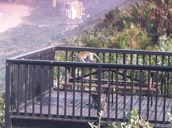 305 Guest House: Monkeys come down to deck every morning