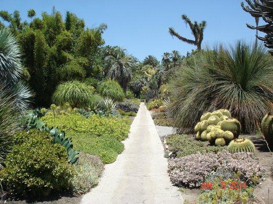The Huntington Library, Art Collections and Botanical Gardens: The Desert garden
