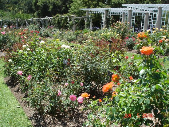 The Huntington Library, Art Collections and Botanical Gardens: The Rose garden