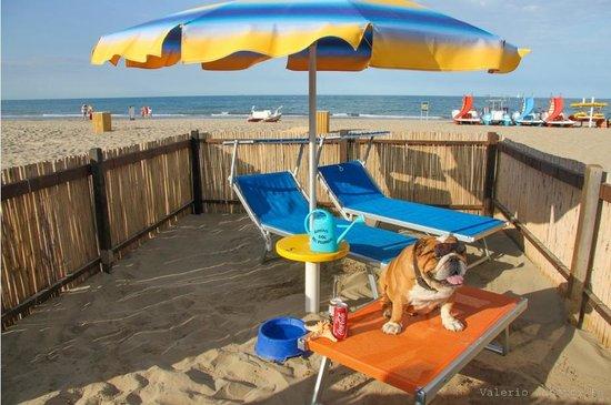 Rimini dog no problem la dog beach del bagno 81 di - Bagno 28 rimini ...