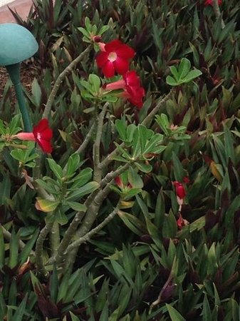 Casa Velas: flowers on the ground