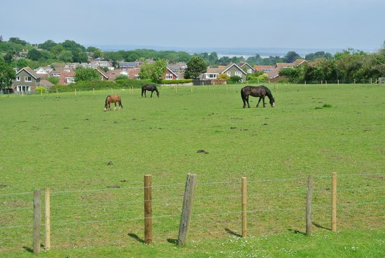 Pencombe House B&B: the neighbor's horses next door