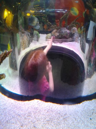 Another Aquarium Picture Of Sea Life Kansas City Kansas