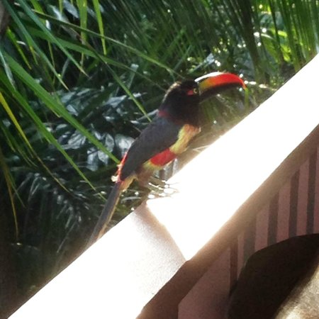 Hotel Costa Verde: This guy came to visit every morning!