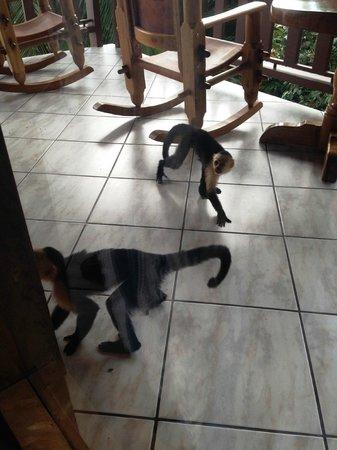 Hotel Costa Verde : Monkeys going bananas on our balcony
