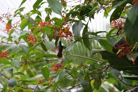Hotel Rancho Cerro Azul: hummingbird