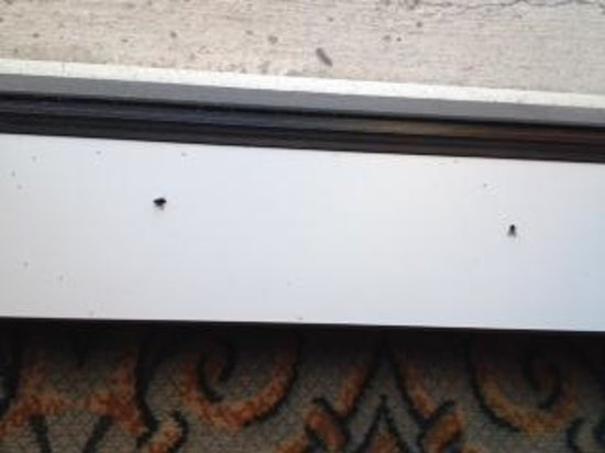 Marina Inn at Grande Dunes: Dead flies in the window sill.