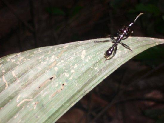 Muyuna Amazon Lodge : Fauna