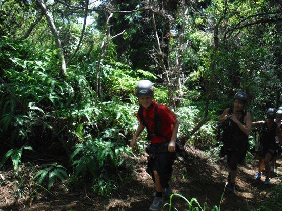 Kapalua Ziplines : rainforest trail