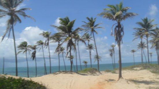 Praia da Lagoinha : Cartão postal