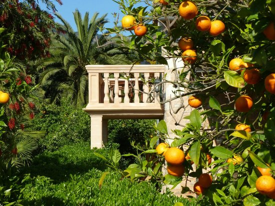 Ca's Curial: Balcony from one of the rooms in the orange grove