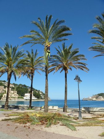 Ca's Curial: Palms at Port Soller