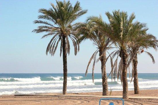 Acqua Chic: COCO TREES ON THE BEACH