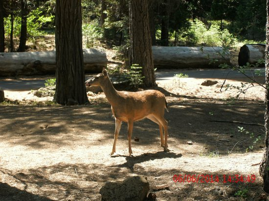 McCloud Outdoors : a deer