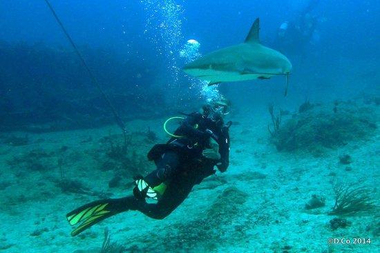 Dive Adventures : Reef shark makes a pass at Milica
