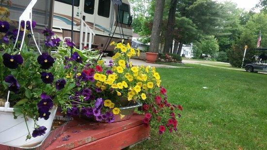 Twin Ells: Spring flower peek through