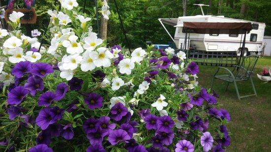 Twin Ells: Spring flower peek throughs
