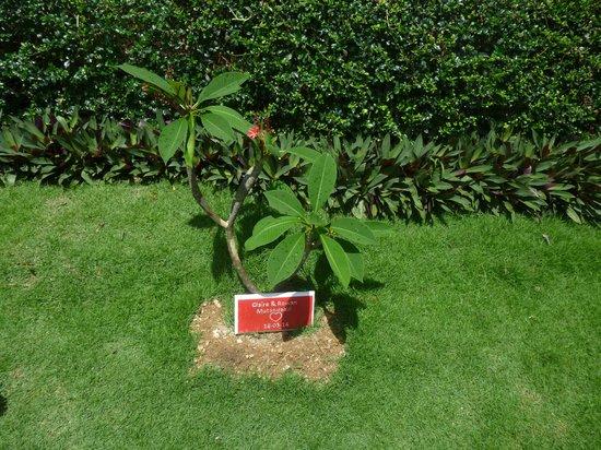 Mantra Samui Resort: Bäume gepflanzt durch Paare