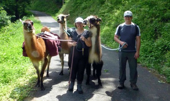 Smoky Mountain Llama Treks - Day Tours : Our guide Steve took our photo with all the llamas on the trail.