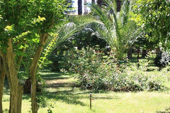 Botanik Hotel & Resort: вид из окна