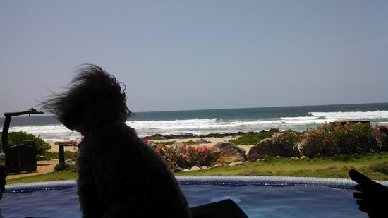 Tres Mujeres Boutique Hotel & Yoga Retreat : Even Bella loved watching the waves!
