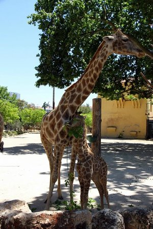 Lisbon Zoo : 2