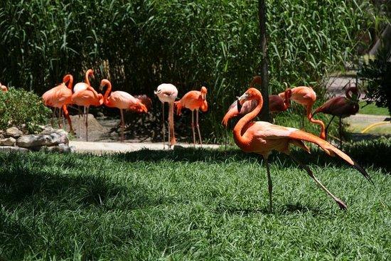 Lisbon Zoo : 3