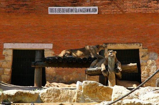 Lisbon Zoo : 1