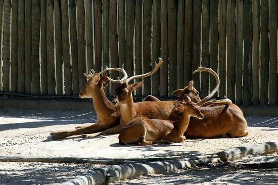 Lisbon Zoo : 4