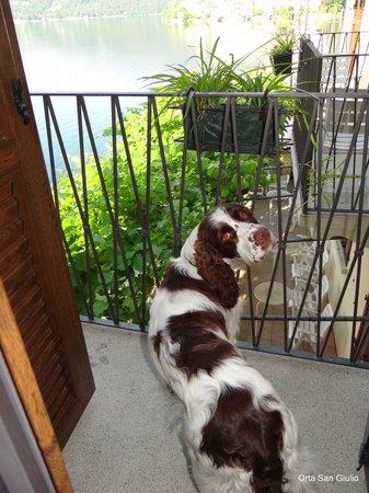 Hotel Leon d'Oro d'Orta : Hotellet er særdeles hundevenligt