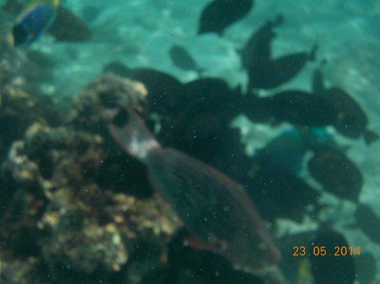 Adaaran Select Meedhupparu : A snorklling encouter