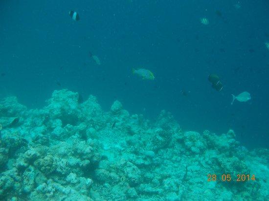 Adaaran Select Meedhupparu : The edge of the reef