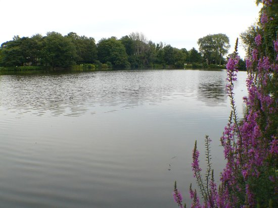 Walden on the Pond : Our Pond