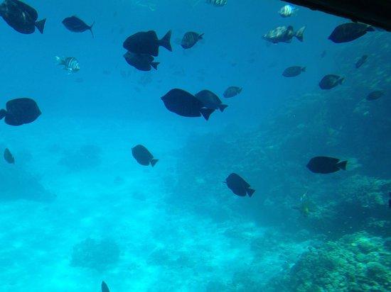 Sharm Safari Club: Submarine